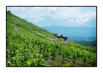 vin de savoie chignin bergeron-Saveurs de nos fermes-Magasin de producteurs Saveurs de nos fermes -Albertville-Gilly Sur Isère-savoie- vente directe- agriculteur-produits locaux-