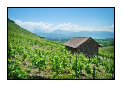 bergeron-Saveurs de nos fermes-Magasin de producteurs Saveurs de nos fermes -Albertville-Gilly Sur Isère-savoie- vente directe- agriculteur-produits locaux-