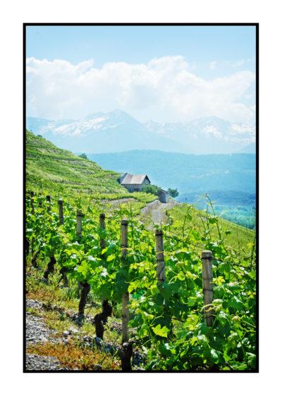 vignes-Saveurs de nos fermes-Magasin de producteurs Saveurs de nos fermes -Albertville-Gilly Sur Isère-savoie- vente directe- agriculteur-produits locaux-