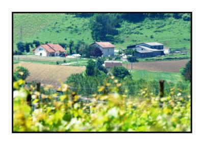 vignoble savoie-Saveurs de nos fermes-Magasin de producteurs Saveurs de nos fermes -Albertville-Gilly Sur Isère-savoie- vente directe- agriculteur-produits locaux-