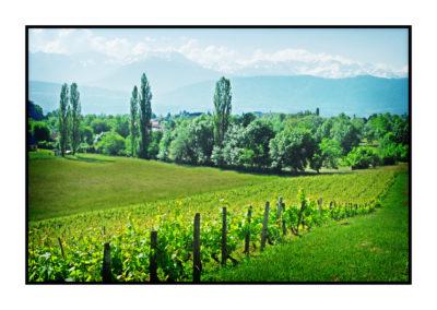 vignes enherbées-Saveurs de nos fermes-Magasin de producteurs Saveurs de nos fermes -Albertville-Gilly Sur Isère-savoie- vente directe- agriculteur-produits locaux-
