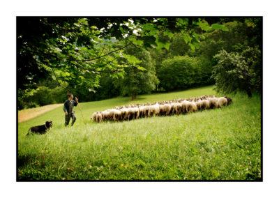 berger-Saveurs de nos fermes-Magasin de producteurs Saveurs de nos fermes -Albertville-Gilly Sur Isère-savoie- vente directe- agriculteur-produits locaux-