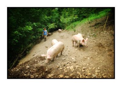 agricultrice- porc plein air- sans ogm-fermier-magasin de producteur-gilly sur isère-albertville- terroir-vente directe-savoie