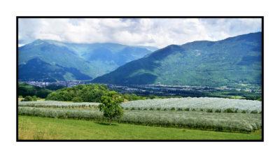 vergers-bio-Pommes bio- locales- arboriculteur- ferme-magasin de producteurs - Gilly sur Isère / Albertville- savoie - terroir