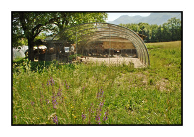 les volailles de notre magasin de producteurs à Gilly sur Isère / Albertville