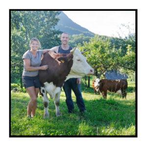 Les vaches de la ferme.